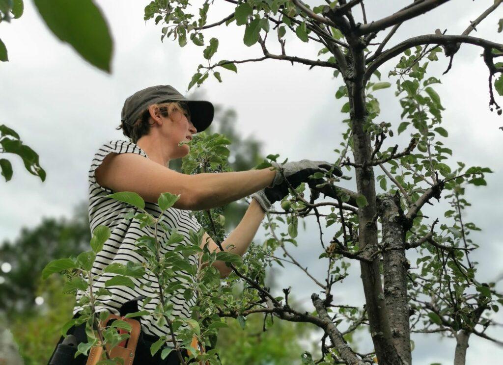 Jenny Hakeberg, fruktträdsbeskärare i Luleå.